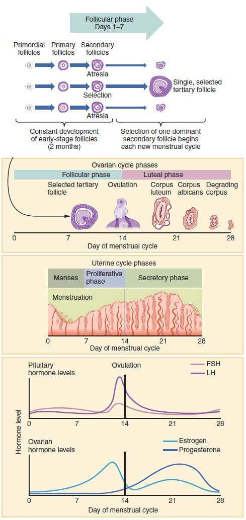 how to find out your ovulation cycle