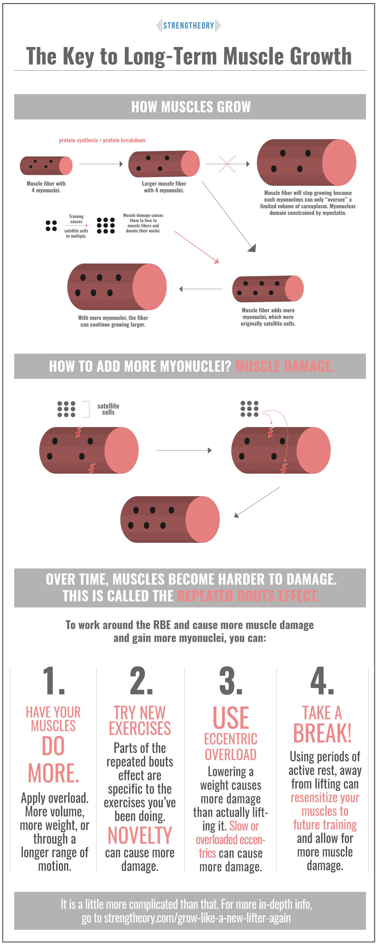 Myonuclei-Article