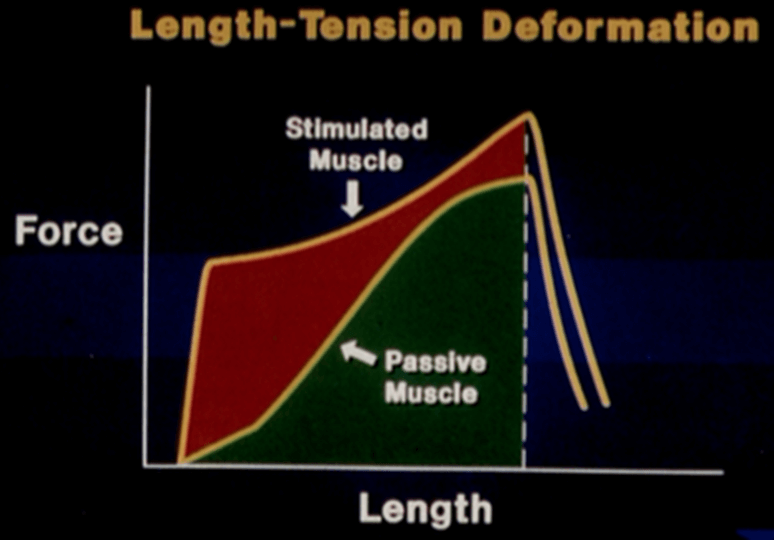 Stress-strain curve for stimulated vs. passive muscle