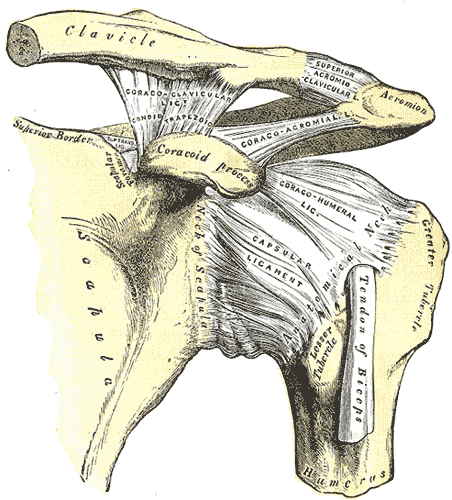 Shoulder complex How to Bench