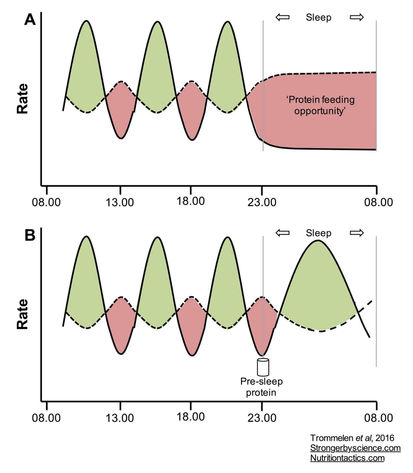 pre-sleep protein intake
