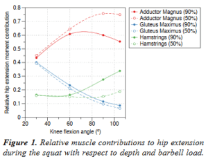 Squats Are Secretly an Adductor Exercise • Stronger by Science