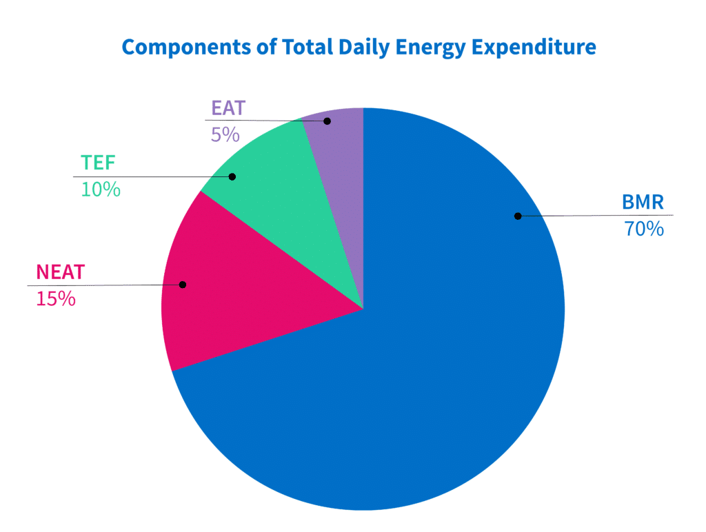 components of total daily energy expenditure pie chart