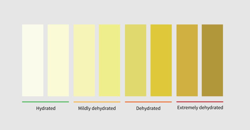 hydration level based on urine color