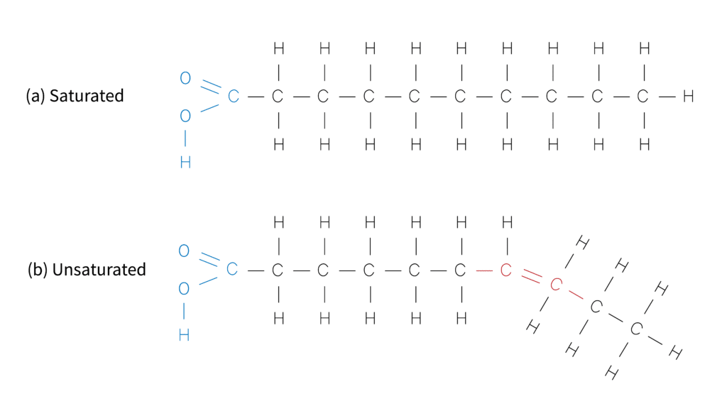 Structure of saturated and unsaturated fatty acids.