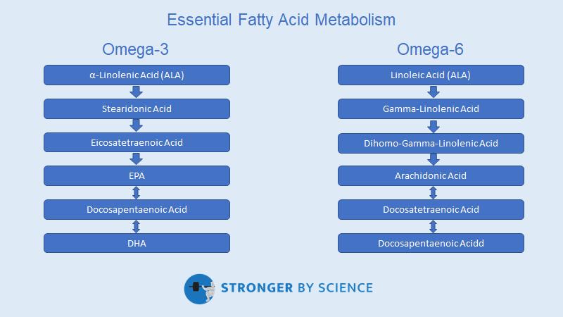 essential fatty acid metabolism