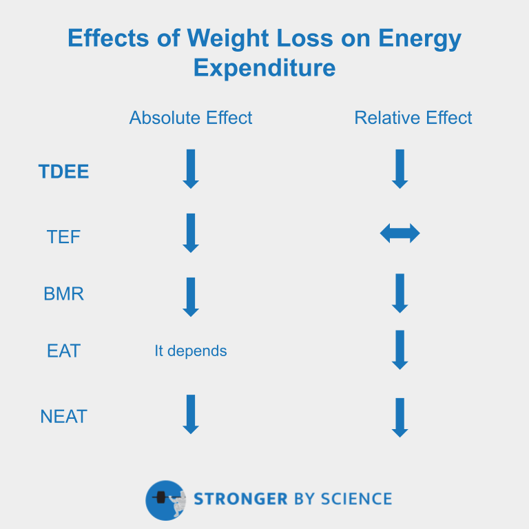 effects of weight loss on various components of energy expenditure